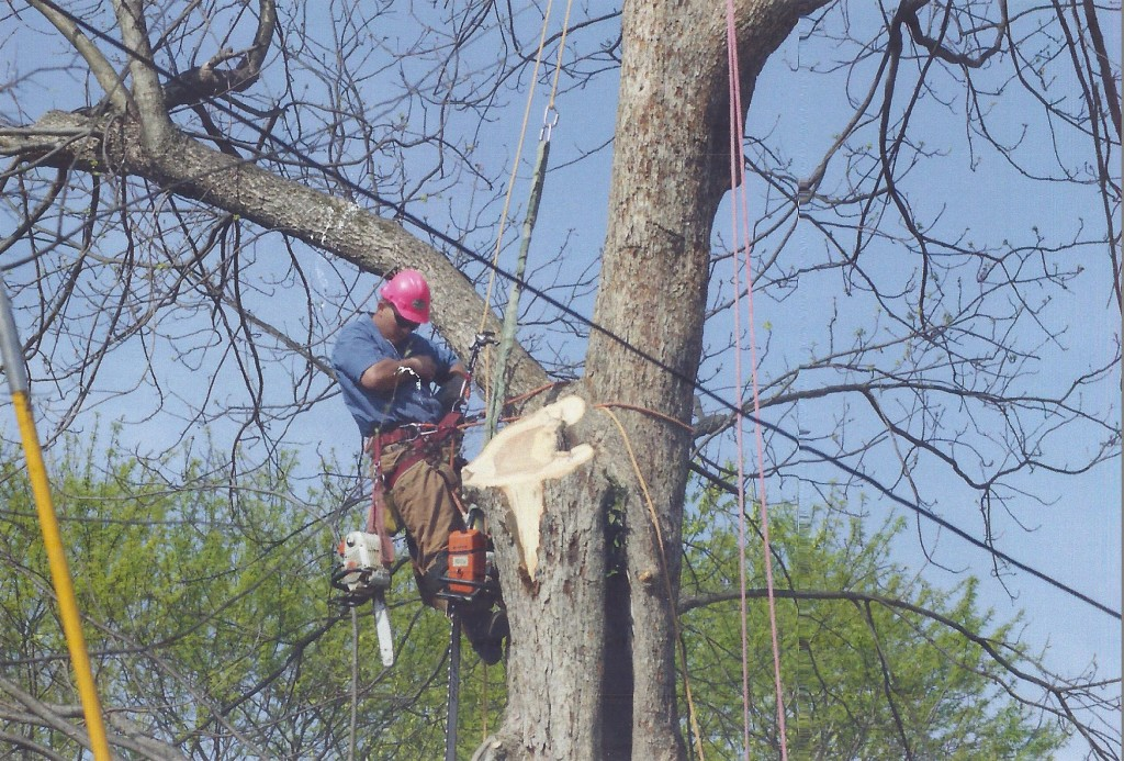 tree-health-care-huntsville-al